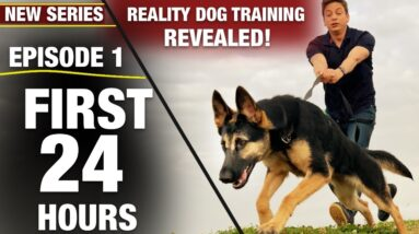 First 24 Hours with a TOTALLY UNTRAINED DOG! [NEW SERIES: Reality Dog Training Revealed!]
