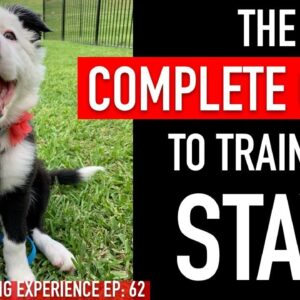 1 Year of Training My Dog Stay in 1 Video
