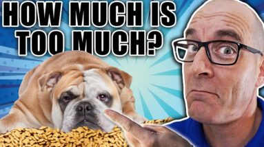 Are You Giving Your Puppy TOO MANY Treats?