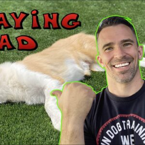 Bang Bang! FAST Way to Teach Your Dog to Play Dead! Dog Tricks!