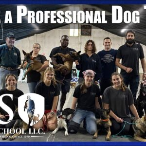 Become a Professional Dog Trainer at The Tom Rose School