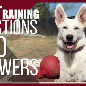 Dog Training Questions and Answers with Nate Schoemer | Part 3
