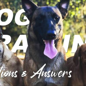 Dog Training Questions and Answers with Nate Schoemer | Part 4