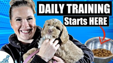 Don't Forget THIS Step In Your Puppy Training Schedule!
