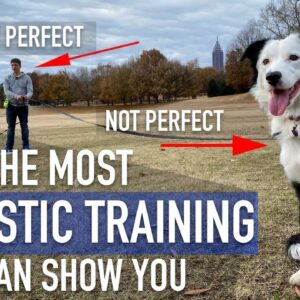 There is no such thing as a perfect dog or a perfect trainer...Here's proof!