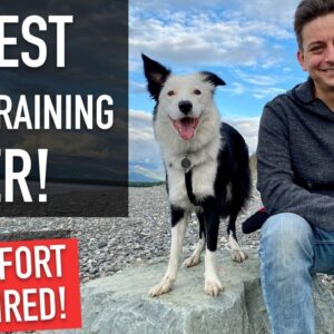 Even if Your Dog is TERRIBLE on LEASH, You Can Do This Training Walk!