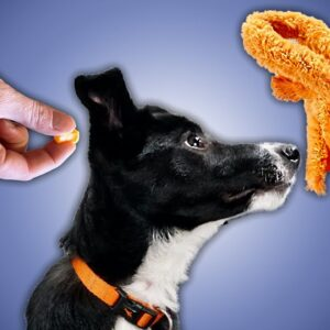 Have You Tried Using TOYS As A Reward In Your Puppy Training?