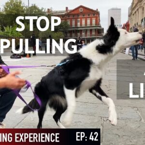 How I'm Training My Dog To Listen in Public!