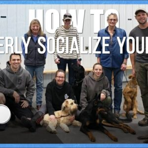 How to Properly Socialize Your Dog