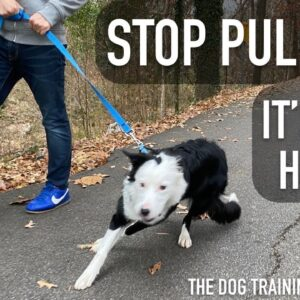 How To STOP LEASH Pulling From Start to Finish!