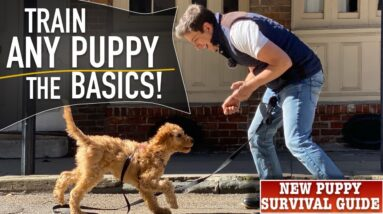 How To Train ANY Puppy To Walk on Leash PERFECTLY!