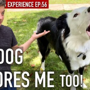How To Train Your Dog to STOP Pretending You Don't Exist!