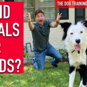 How to Train Your Dog to UNDERSTAND HAND SIGNALS and WORDS!