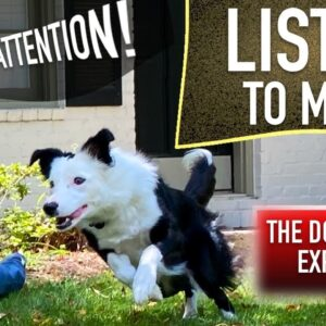 How to Train Your Dog When They ONLY Listen SOMETIMES!