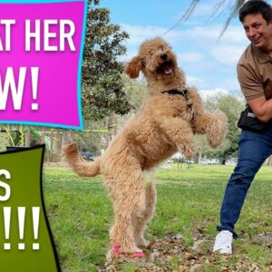 I Had 3 Weeks to Train This Dog! Did it work Long Term?