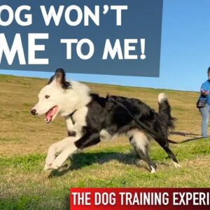 I Let My Dog Off Leash and She Ran Away From Me!