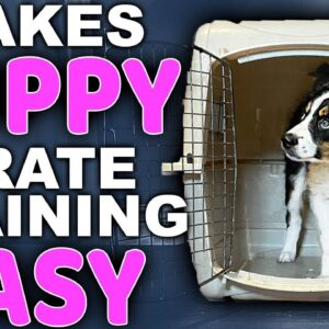 Choosing The Right Puppy Crate Training Location - Bringing Home A New Puppy Episode 3