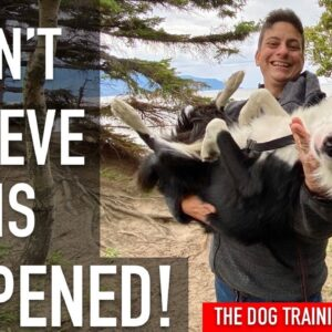 I'm Training My Dog in the WILDERNESS! Stuff Goes Wrong!