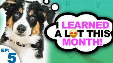Puppy Training Expectations And Goals For The First Month - Bringing Home A New Puppy Episode 5