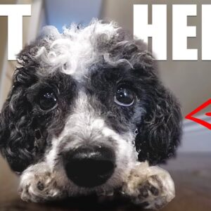 Is Your Dog REALLY Sick? Know The Warning Signs!