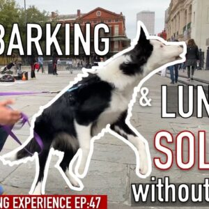 My Dog Barks And Lunges: Can I train her to stop without force?