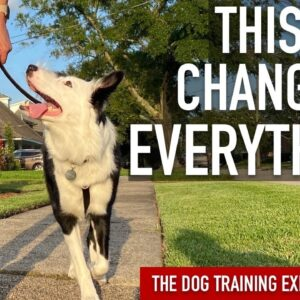 How to Train the 1 Thing That's Made All the Difference in My Leash Training