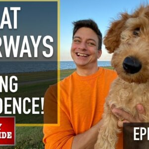 NEW PUPPY SURVIVAL GUIDE: STAY in EXCITING SITUATIONS & Fear Prevention! (EP 10)