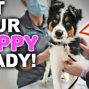 Is Your Puppy Ready For Their First Vet Visit? - Bringing Home A New Puppy Episode 4