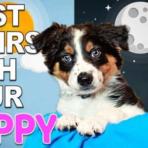 Your First Day And Night With A New Puppy - Bringing Home A New Puppy Episode 2
