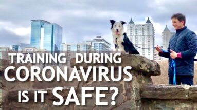 SPECIAL UPDATE: Your Dog and Coronavirus