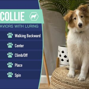 Teach Your Dog 10 Behaviors with Luring | Rough Collie Dog Training