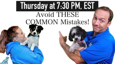 The 5 Most Common Puppy Training Mistakes - And How To Avoid Them!