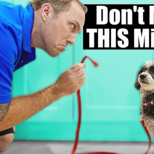The BIGGEST Mistake People Make With A Puppy Training House Line