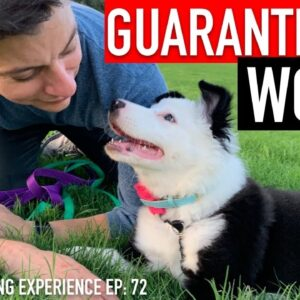 The Complete Guide to Potty Training Your Puppy!