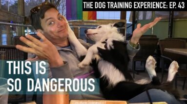This Takes Minutes To Train And Will Save Your Dog's Life