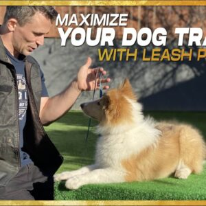 How to use a Leash to Stop 90% of Behavior Problems. Leash Pressure Training!