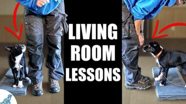 5 Puppy Training Exercises You Should Do EVERY DAY At Home! - Living Room Lessons