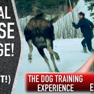 Training My Own Dog: An Honest Look at Where We are Now.