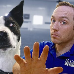 Want To Get A Rescue Dog? Watch THIS First!