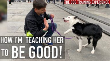 WATCH THIS if Your Dog Embarrasses You in Public!