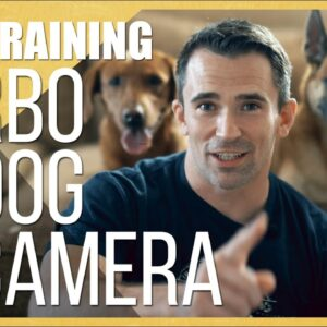 What to Do When Your Dog is Home Alone: A Look at the Furbo Dog Camera