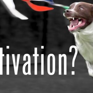 Which Dog Trainer Has The Fastest Dog? - Recall Challenge