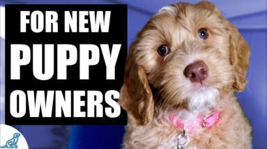 Your Complete First Week Puppy Training Plan