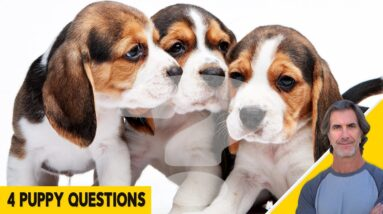 4 Puppy Questions Answered - Puppy Behavior and Training