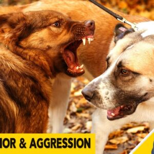 Aggression, Growling and Bad Behavior in Dogs Q&A