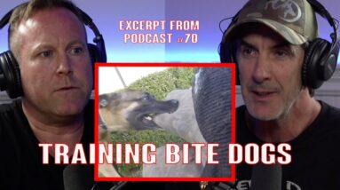 How to Train Protection Dogs to BITE - Police Dogs, Personal Protection, Sport Dogs