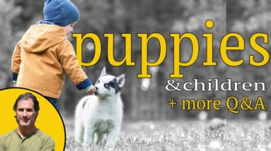 Best Puppy Advice 4-26-21 - How to Train Your Puppy