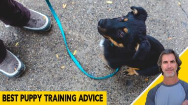 Best Puppy Training Advice for All Puppies