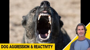 Dog Aggression and Reactivity Issues