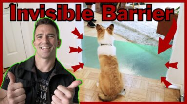 Easily and Quickly Teach Your Dog boundaries. The Invisible Barrier!